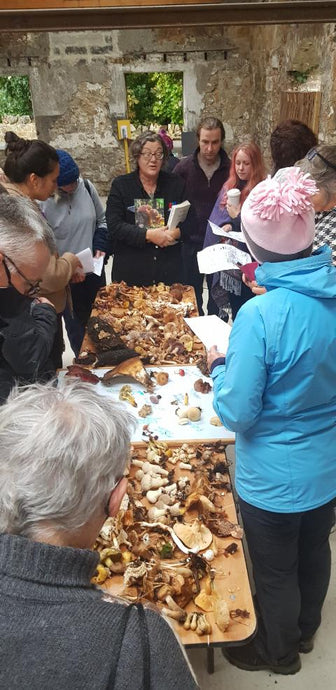 Mushroom Hunt, Small Group  on Wed 21st October in Co. Dublin