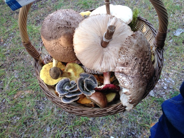 Wicklow Naturally, Mushroom Hunt on 18th October near Rathdrum