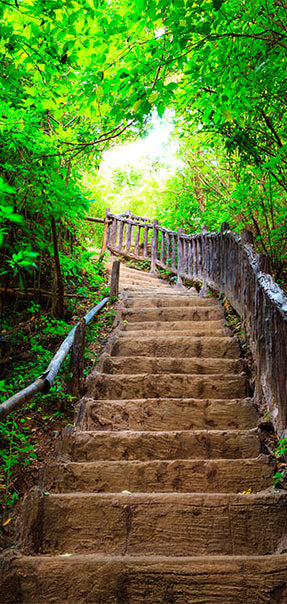 Papier-peint pour porte - Photo wallpaper – Stairs from nature I