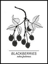 Ladda bilder till galleriet, Blackberries