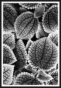 Leaf black and white