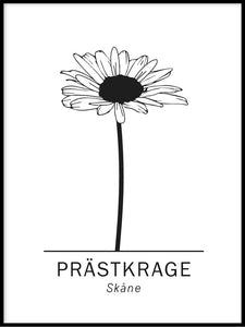 Prästkrage, Skånes landskapsblomma alternativ 2