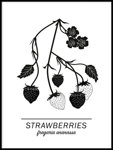 Strawberries Poster