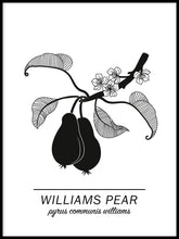 Ladda bilder till galleriet, Williams Pear Poster