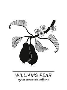 Williams Pear Poster
