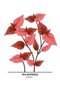 Yes Mistress Coleus Poster