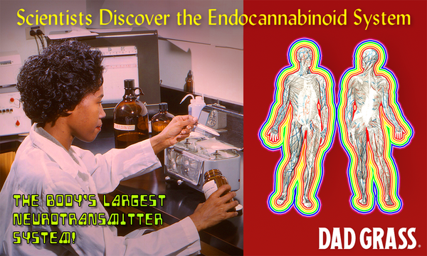 """Photo of a scientist and a map of human body systems. Caption reads """"Scientists discover the endocannabinoid system, the body's largest neurotransmitter system."""""""