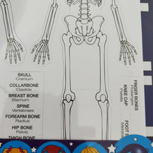 Skeleton magnetic board - bones