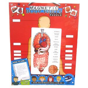 Human body parts puzzle magnetic board