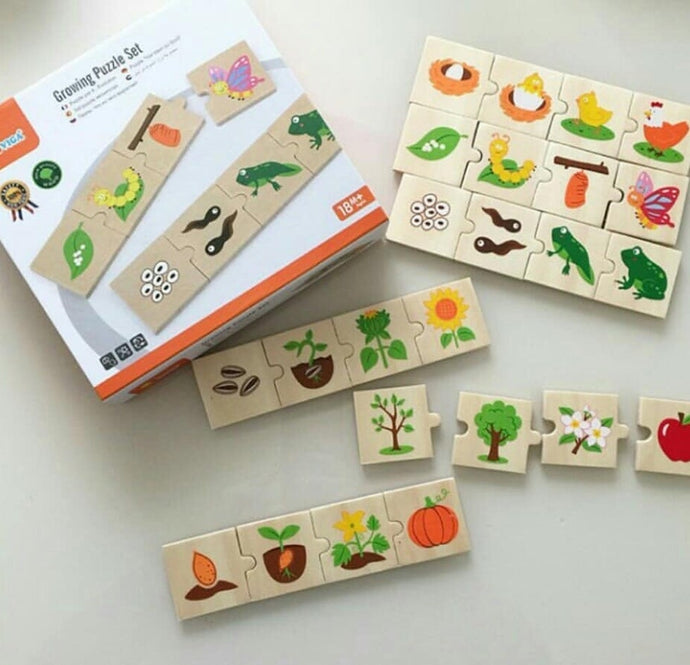 Wooden Life cycle - Growing sequence puzzle set tadpoles to frogs