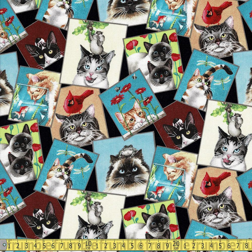 Curious Cats Funny Photo Black Fabric by Elizabeth Studio