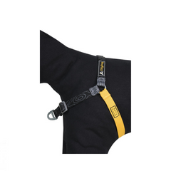 OllyDog Essential Harness
