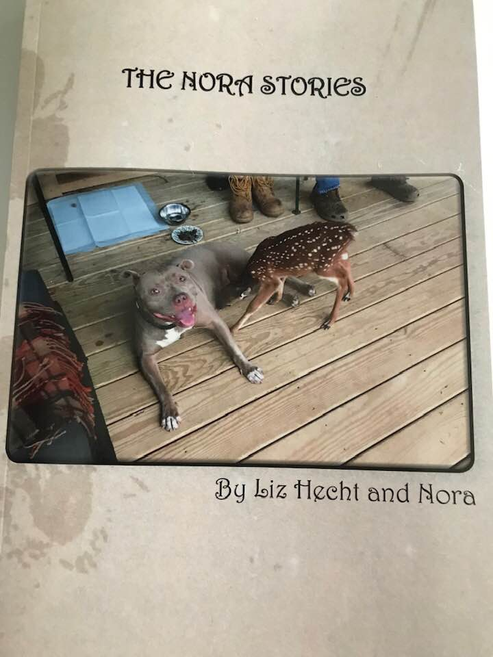 The Nora Stories : A Little Book With a Big Heart