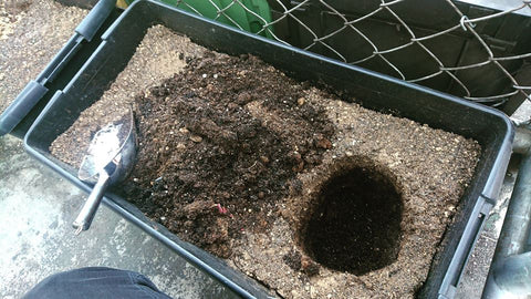 digging into bokashi compost