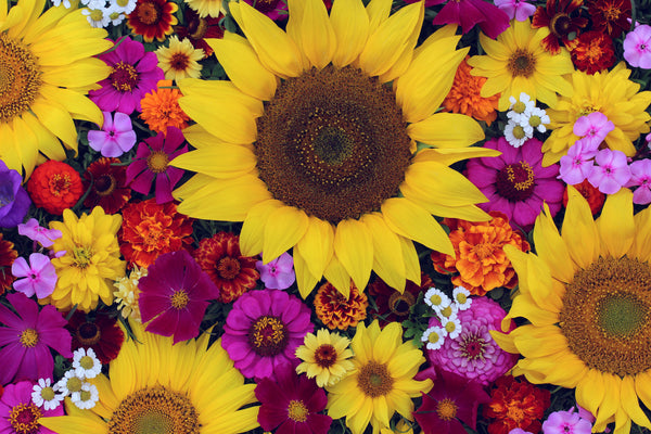 bright colorful flowers illustrating health and sexual vitality