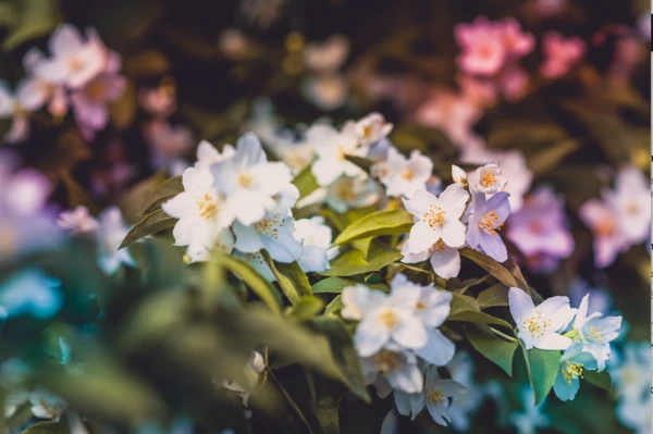 Relaxing image of flowers