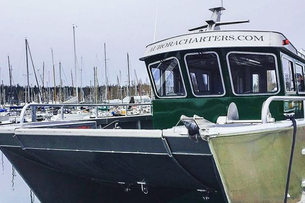 Aurora Charters: Your Expert Seward Fishing Charter