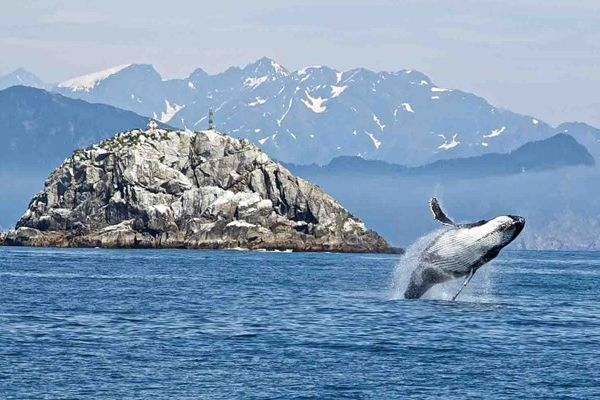 Kenai Fjords National Park Glacier & Wildlife Tours