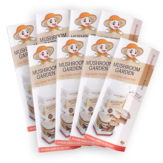 Grey Oyster Mushroom Kit Bundle Promo (8x)