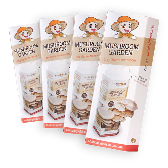 Grey Oyster Mushroom Kit Family Promo (4x)
