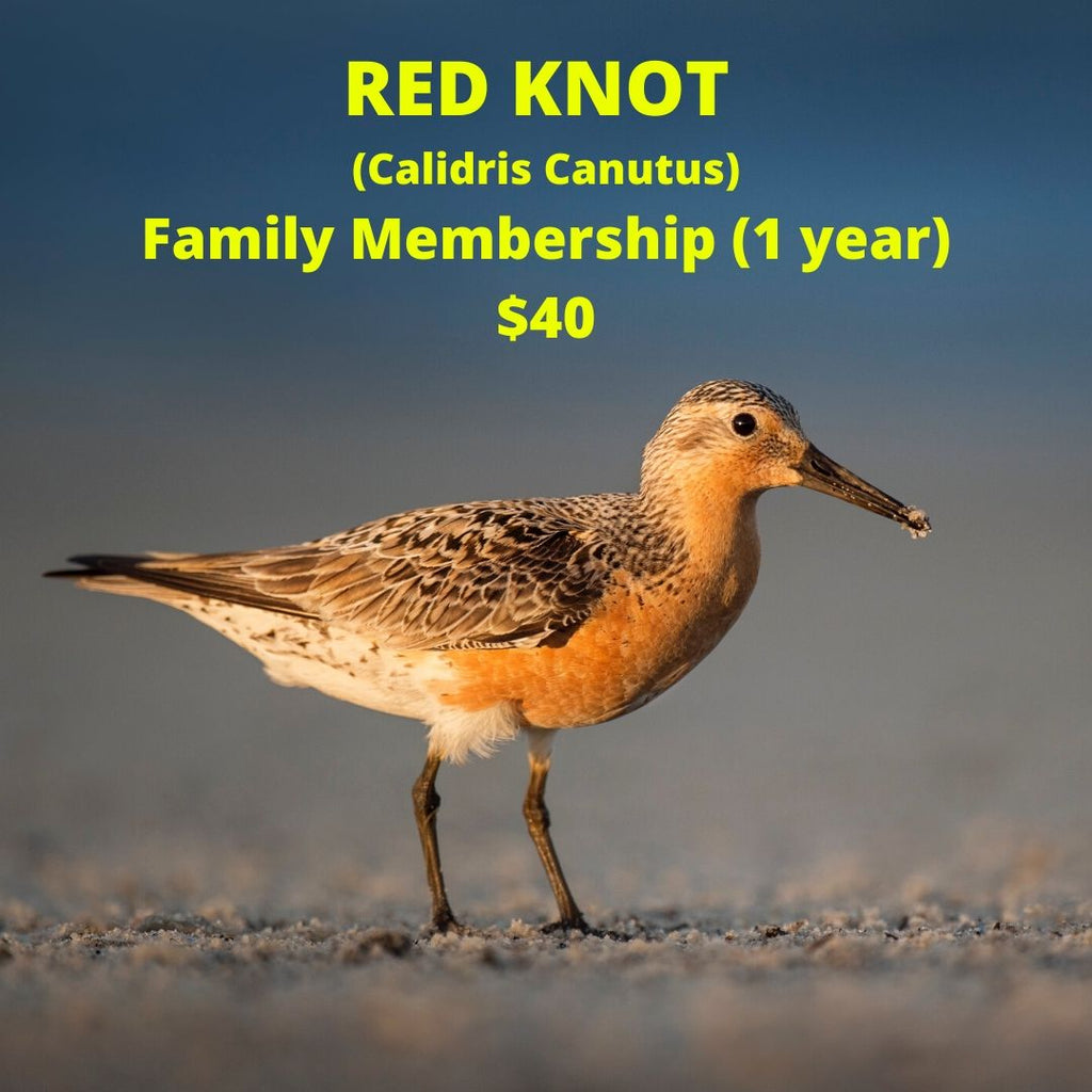 Red Knot Family Membership