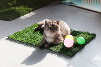 Why pet artificial turf is worthy of attention
