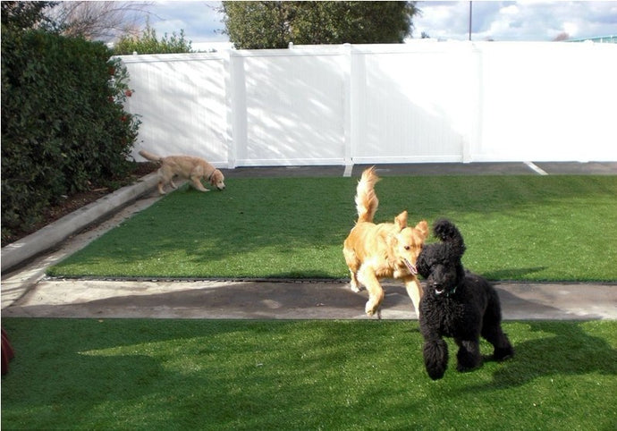 Dog-Friendly Artificial Grass