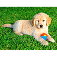 Why Artificial Grass Is Good for Dogs?