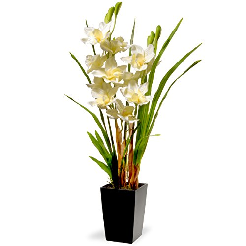 "31"" White Orchid Flowers"