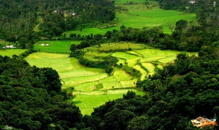 COORG MYSORE OOTY PACKAGE