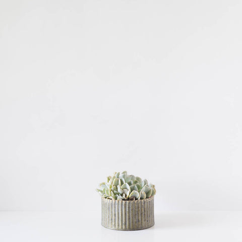 Single Round Succulent Tin Planter