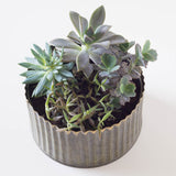 Mini Round Assorted Succulent Tin Planter
