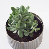 Medium Single Round Succulent Tin Planter