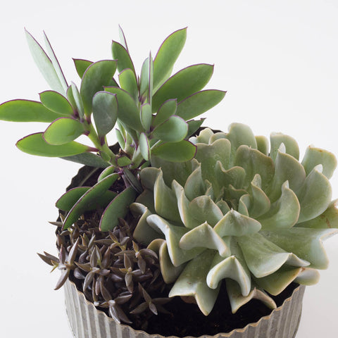 Medium Round Assorted Succulent Tin Planter