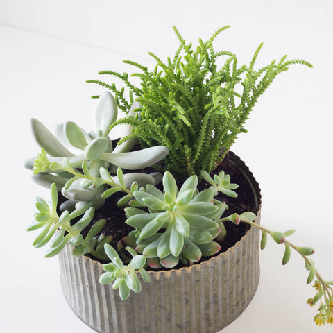 Large Round Assorted Succulent Tin Planter
