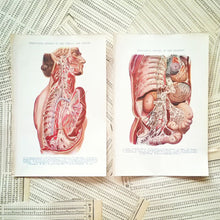 Load image into Gallery viewer, Vintage Medical Pages - Deep Lying Nerves