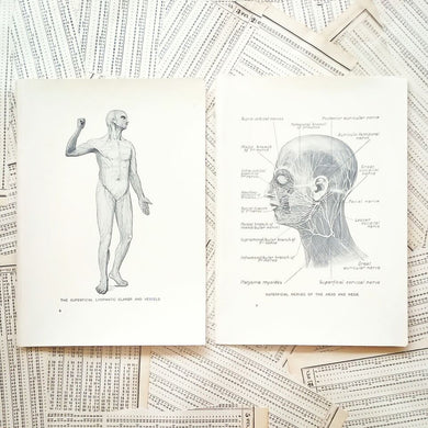 Vintage Medical Pages - Superficial Glands and Nerves