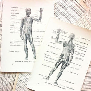 Vintage Medical Pages - Deep View of Muscles, Front and Back