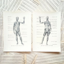 Load image into Gallery viewer, Vintage Medical Pages - Deep View of Muscles, Front and Back