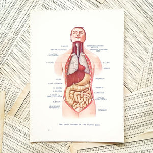 Vintage Medical Pages - Chief Organs of the Human Body