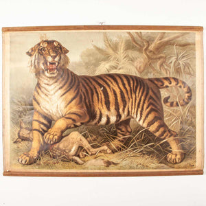 Early 20th Century Vintage Czechoslovakian Educational Chart - Tiger & Deer