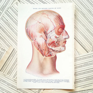 Vintage Medical Page - Motor and Sensory Nerves of Sight