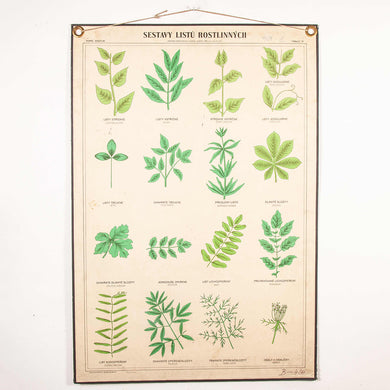 Early 20th Century Educational Chart - Rigid Chart Plants