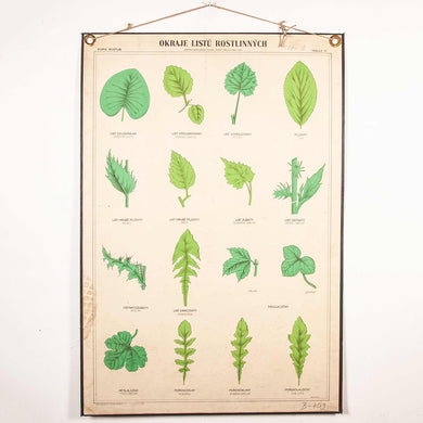 Early 20th Century Educational Chart - Rigid Chart Plant - Leaf Varieties
