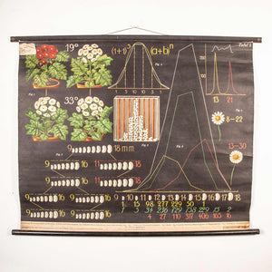 Early 20th Century Educational Chart - Seed Production