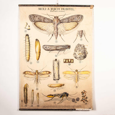 Early 20th Century Educational Moths And Their Killers Chart