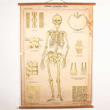 Load image into Gallery viewer, Early 20th Century Educational Human Skeleton Chart