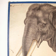 Load image into Gallery viewer, Early 20th Century Educational Rigid Chart - Elephant