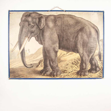 Early 20th Century Educational Rigid Chart - Elephant