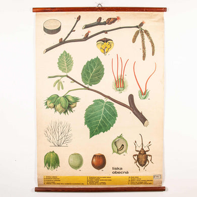 Early 20th Century Plant & Insect Chart